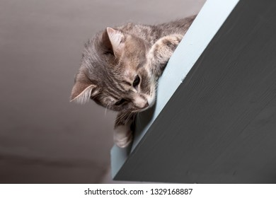 Young, lovely, calm cat lies on a shelf under the ceiling and looks down.