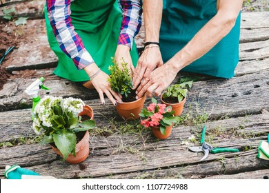 Young loving couple have fun planting flowers in vase on a wooden floor during spring day, they are dressed with work clothes
