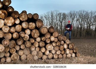 Young lumber engineer with notebook standing on cut trunks. Forest in background