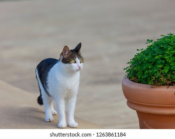 Young male cat standing looking at green plant. Stock Image