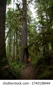 Young male child standing next to a huge spruce tree looking up into the sky.