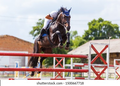 Young male horse rider on equestrian sport competition in show jumping contest