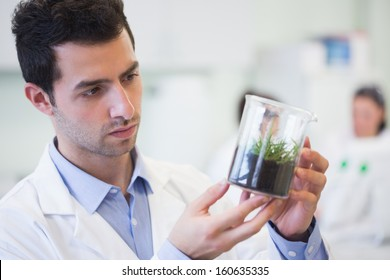 Young male researcher looking at young plant at the laboratory