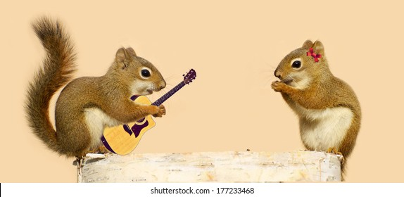 A young male squirrel playing a love song for his sweetheart.  Part of a fun series.