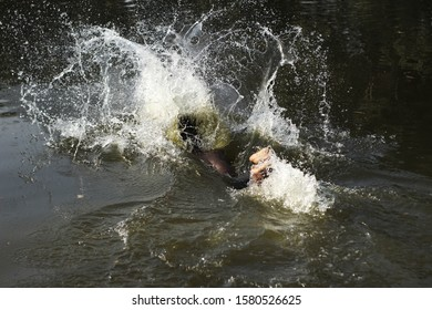 A young male swimmer swimming on the pond. A super fast swimmer bathing on a swimming pool. A village guy bathing on a lake in a winters morning. A tribal boy enjoying bathing in a deep forest.