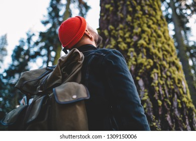 Young male tourist with casual rucksack looking up and admiring high tree in forest, professional hiker with trendy backpack enjoying time for trekking tour to green forest in nature environment