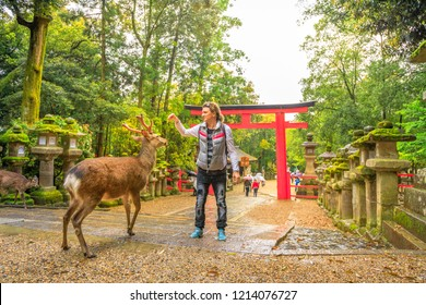 Young male tourist feeds with deer biscuit at Nara wild deer in a public park of Nara, Japan. Red Torii and stone lanterns on background. Tourism and travel concept. Spring rain day.