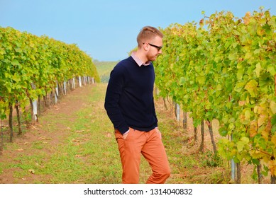 Young male winemaker checking the vineyard after the harvest. The vine leaves are damaged and have remarkable spots caused by infection. The caucasian man is wearing dark pullover and black sunglasses