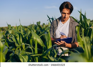 Young man agronomist standing in a corn field and taking control of the yield. Image