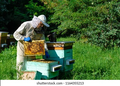 A young man beekeeper works on a beehive near the hives. Natural honey directly from the hive.