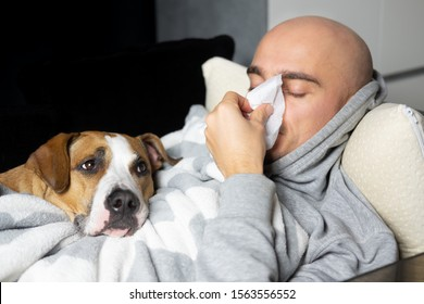 Young man blows his nose in a paper handkerchief lying in bed with his dog. Seasonal cold concept. Animal allergy concept