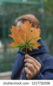 A young man in a blue hood hand holding an autumn golden leaf and hides his face behind, a small depth of field
