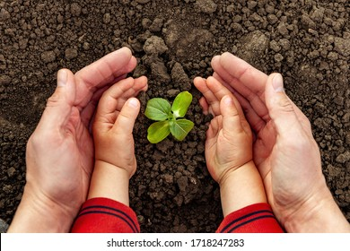A young man and a child hold a small tree in their hands. Concept of world environment day. Four hands hold a light green tree. Father and son plant a plant - Shutterstock ID 1718247283