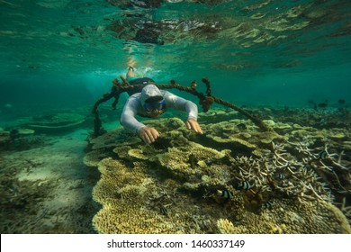 A young man dives among the multicolored corals in the Indian Ocean. Snorkeling in Mauritius