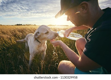 Young man with dog at sunset in summer nature. Thirsty yellow labrador retriever drinking water from the plastic bottle.