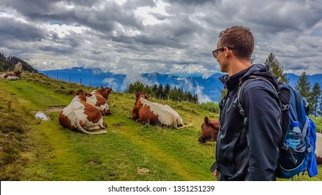 A young man encounters a herd of cows on a hiking rail. Cows are lying on the trail.  Brown and withe flecks on the animals. Boy wears sunglasses and a hiking backpack. Huge overcast. Lazy animals.