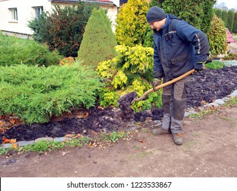 Young man farmer mulching and fertilizing flower bed with seaweeds algae at autumn