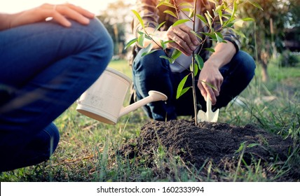 young man gardener, planting tree in garden, gardening and watering plants.