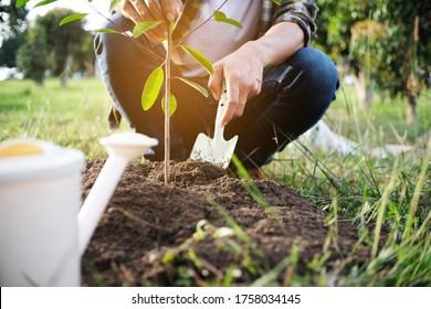 Jungtiergarten, Pflanzbaum im Garten, Garten- und Wasserpflanzen.