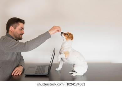 young man giving treats to his cute small dog. Laptop on the table. dog sitting on the table. white background. Indoors