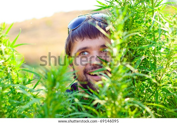 Young man with glasses in the bush of hemp. Shoot in the field of marijuana.