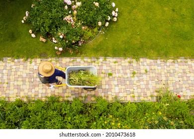 Un joven con las manos en guantes lleva un carro de jardín metálico a través de su hermoso jardín floreciente. Un jardinero profesional lleva una carretilla en el camino del jardín
