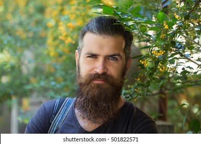 Young man hipster with long beard on handsome sexy face fashion brunette hair in casual dark shirt on green tree background outdoor