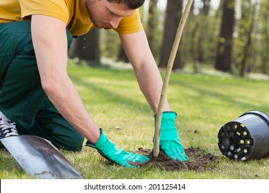 Young man kneeling during planting a tree