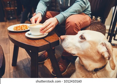 Young man with labrador retriever in the cafe. Curious dog looking on the table with sweet waffles of the his owner.