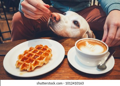 Young man with labrador retriever in the cafe. Curious dog under the table with sweet waffles and coffee.
