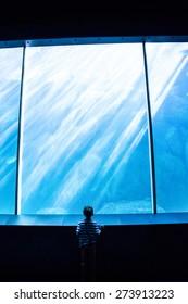 Young man looking at a giant aquarium