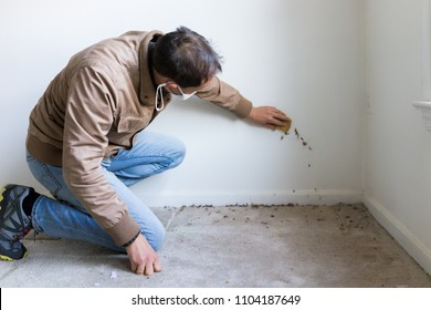 Young man in mask sitting crouching by room wall carpet floor flooring, white painted walls, during remodeling renovation, cleaning with sponge, inspection of dirty mold, dust, trash