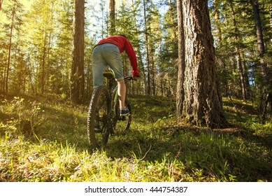 Young man on a Bike rides around the track in the forest at sunset