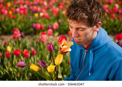 Young man is picking flowers in Dutch flower fields