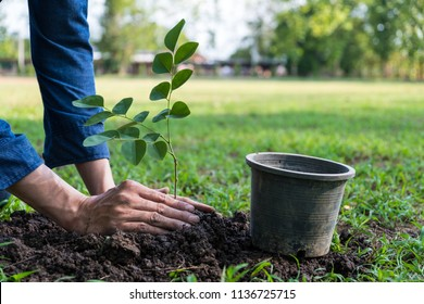 The young man is planting tree in the garden to preserve environment concept, nature, world,ecology and reduce air pollution.