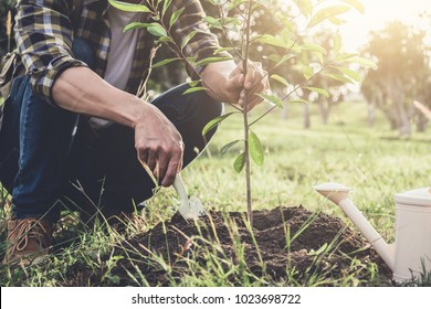 Young man planting the tree while Watering a tree working in the garden as save world concept, nature, environment and ecology.