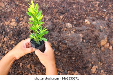 The young man is planting trees on brown ground to help reduce global warming, take blurred pictures