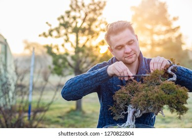 Young man pruning bonsai tree. Small business concept
