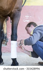young man is putting white bandages on a purebred brown horse's leg at the byre - focus on the face
