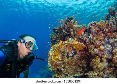 Young man scuba diver exploring coral reef. Underwater fauna and flora, marine life.