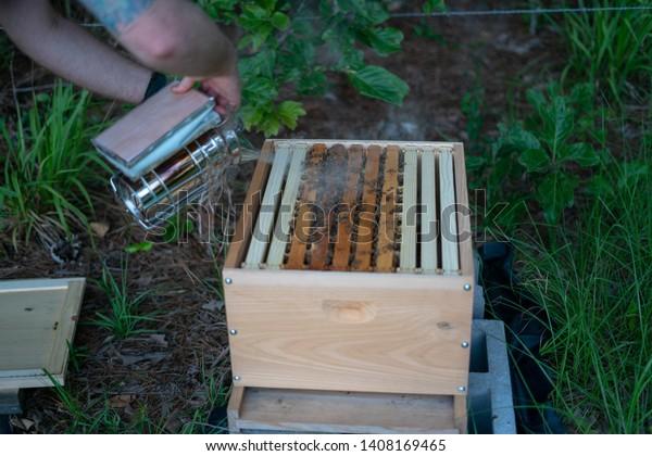 Young Man Smokes Beehive Make Bees Stock Photo (Edit Now