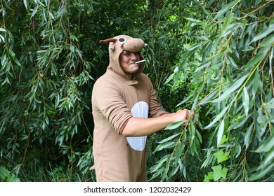 Young man is smoking in the forest in cosplay costume of a cow. Guy in the funny animal pyjamas sleepwear in the nature. Halloween ideas for party.