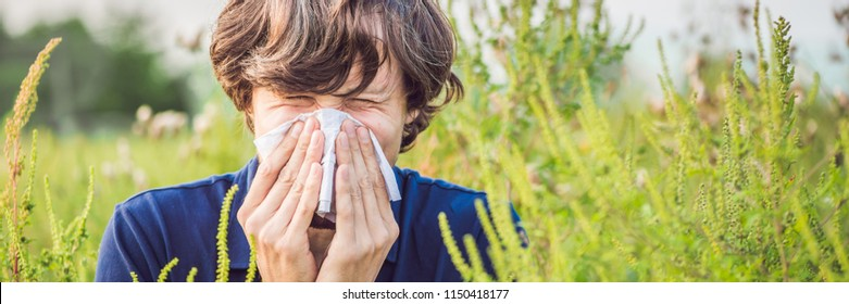 Young man sneezes because of an allergy to ragweed BANNER, long format