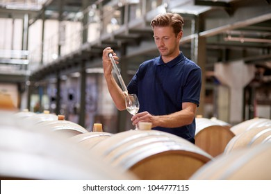 Young man testing wine in a wine factory warehouse
