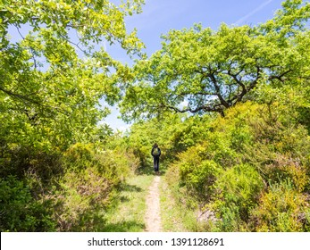 Young man treking in nature north from Lisbon, Portugal, ona sunny day.