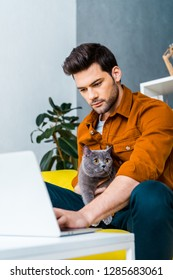 young man using laptop on sofa with british shorthair cat