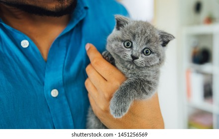 Young man or veterinary holding baby scottish fold gray kitten. Portrait of a Cute, beautiful and fluffy grey scottish fold cat at vet clinic