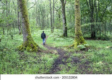 young man walking alone on a path in the legendary  Paimpont Forest (Broceliande), Brittany, France