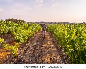 Young man walking among vines in a vineyard in Alentejo region, Portugal.