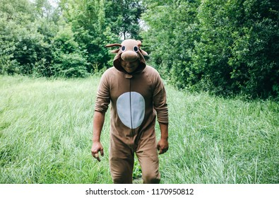 Young man is walking in the forest in cosplay costume of a cow. Guy in the funny animal pajamas sleepwear  in the nature. Halloween ideas for party.